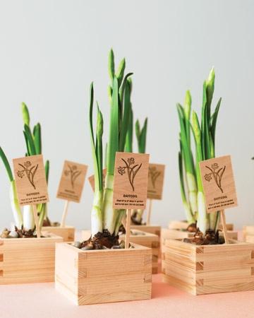 Daffodil Bulbs Wedding Favor