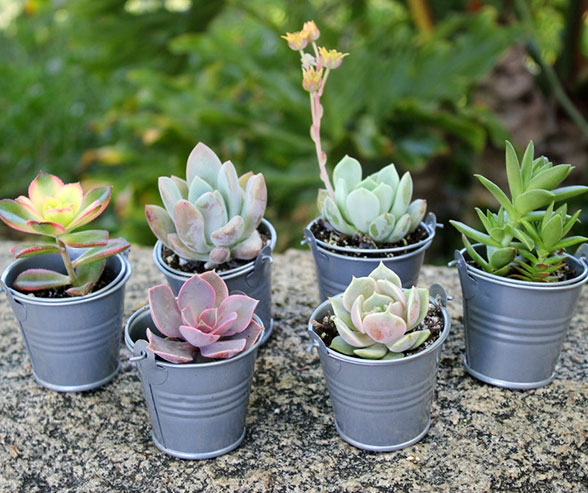 Succulents-wedding-favors