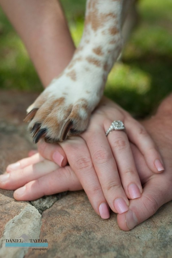 Engagement Photography with Pet Dog