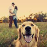 15 Oh So Romantic Engagement Photos With Dogs