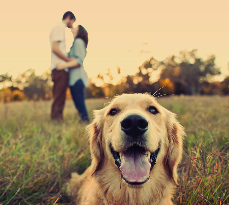 Engagement photo ideas with dog