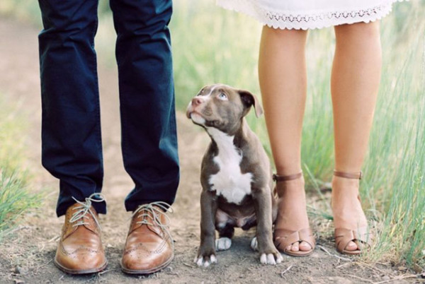 engagement photo ideas with cute pitbull dog