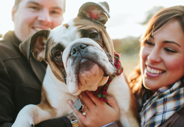engagement photo with english bull dog