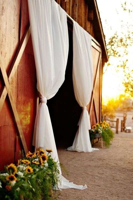 Sunflower would work for my decor, and the barn!