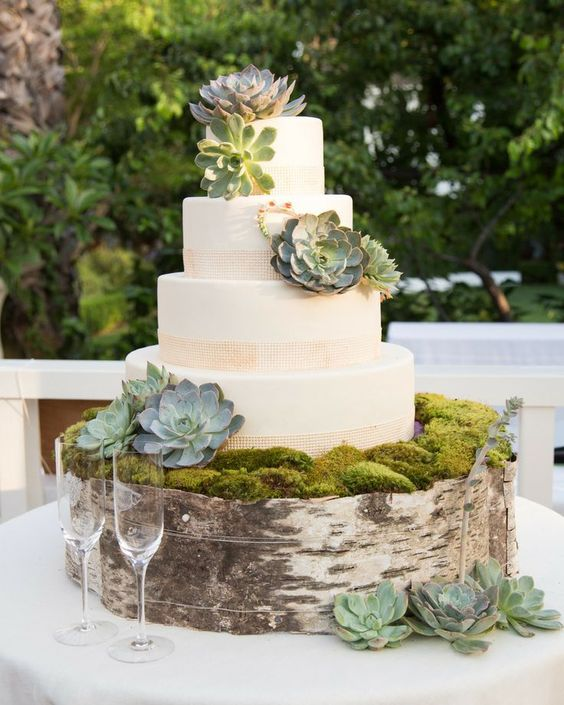 Succulent cake with birch tree stump decor