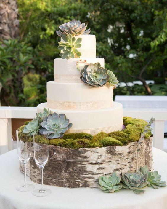 Succulent cake with birch tree stump decor