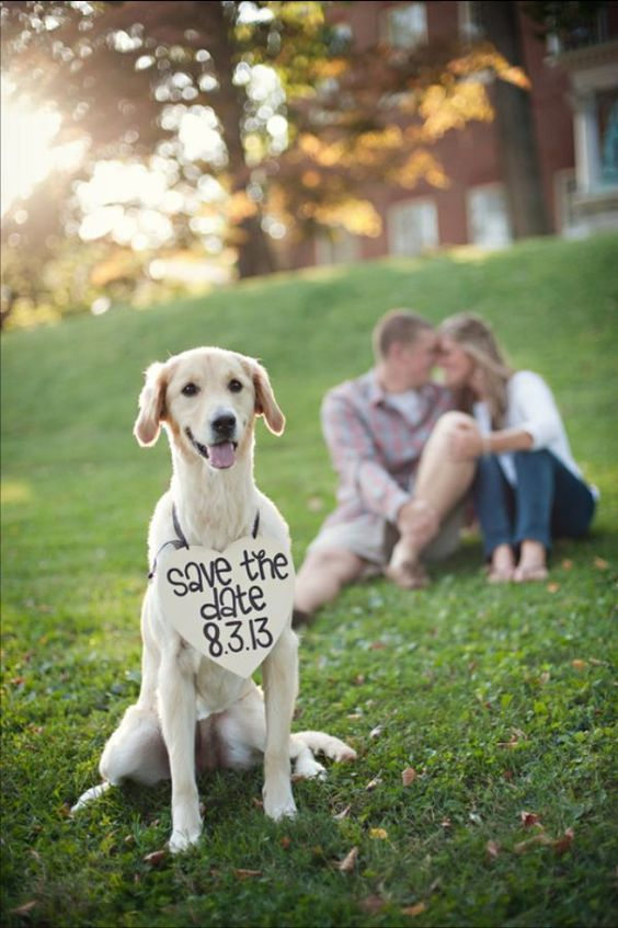 Cute save the date photo ideas with dogs