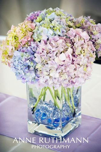 Lavender &and Periwinkle Hydrangea