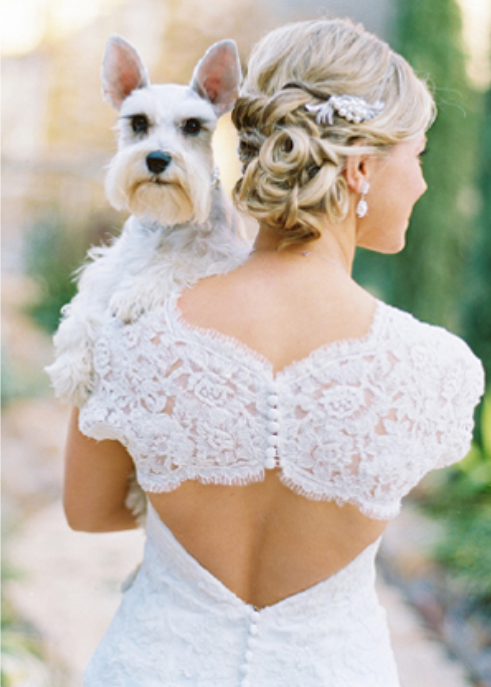 beautiful dogs at wedding