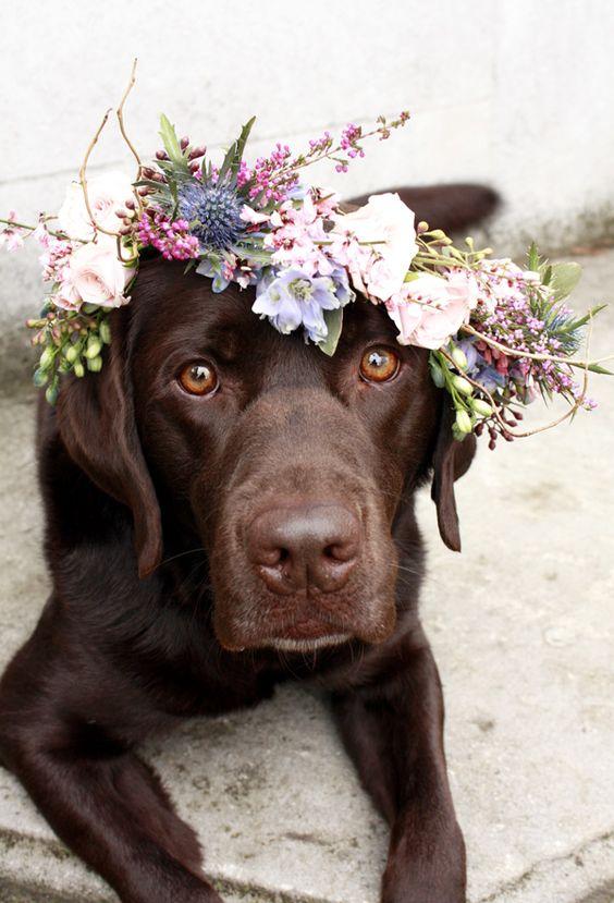 best dog model wearing floral crown