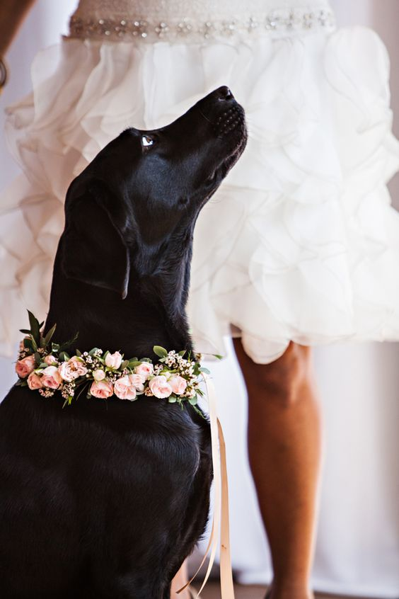 black dogs with pink flower crown