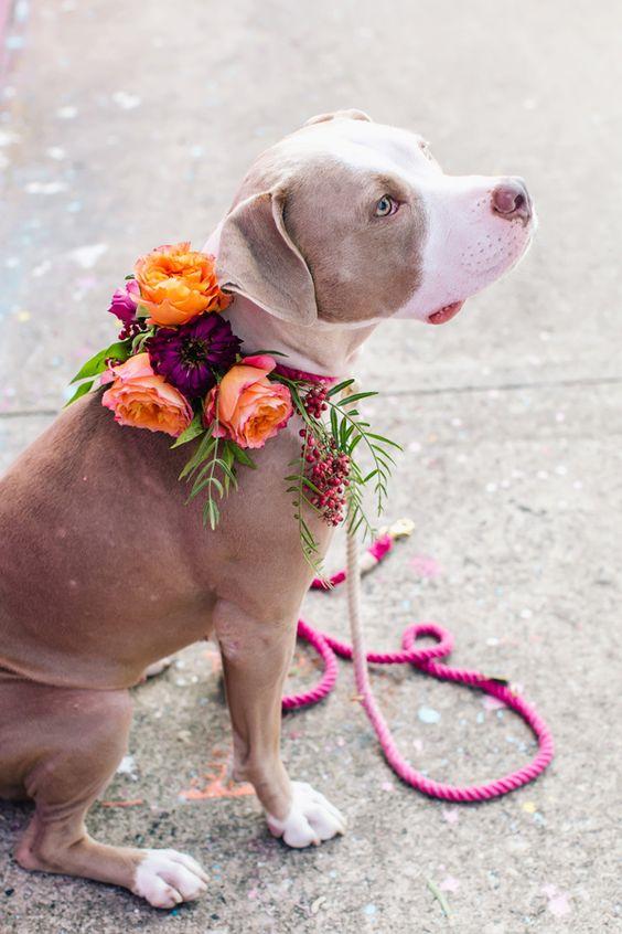 cute and adorabale dog photo at wedding