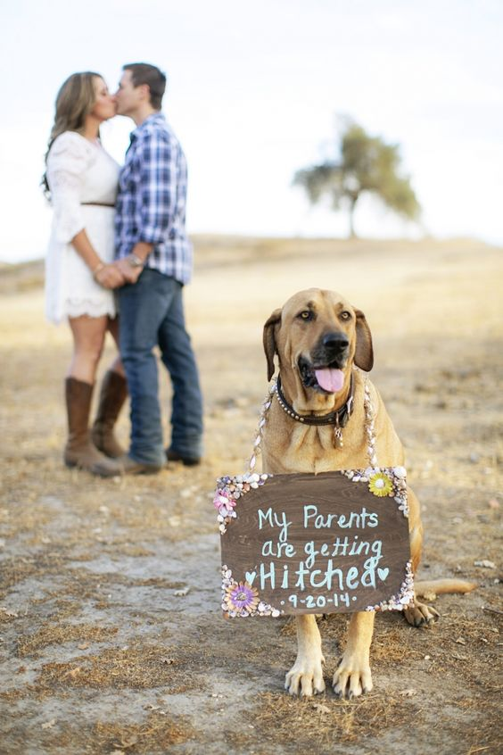 cute wedding dogs for country wedding