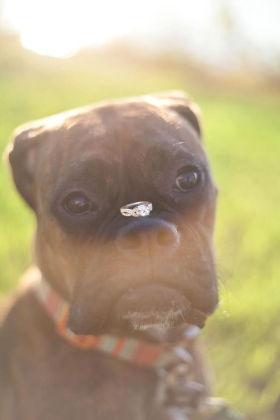 http://www.weddinginclude.com/wp-content/uploads/2017/08/dogs-at-weddings-best-friend-ever.png
