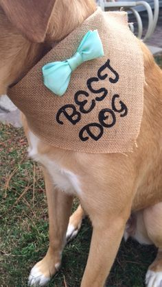 dogs at weddings-funny best dog ever