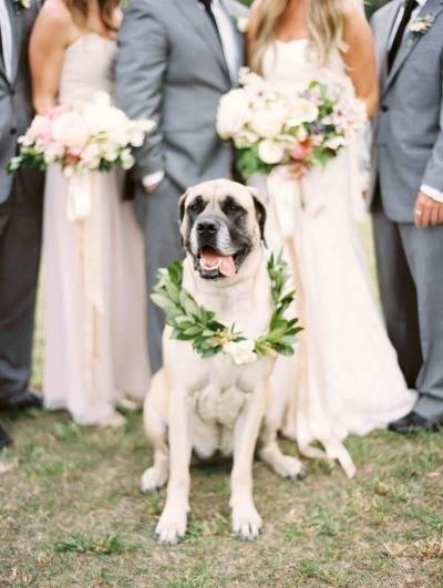 dogs get invited at wedding