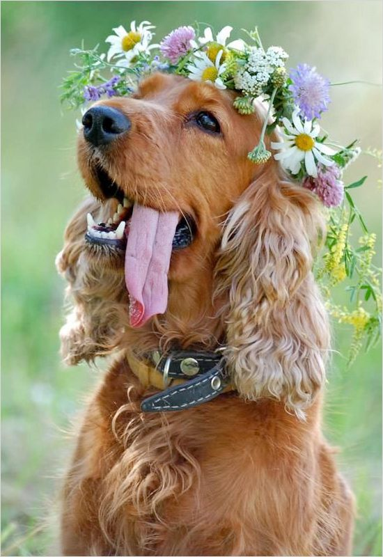 flower-decorated dogs at weddings