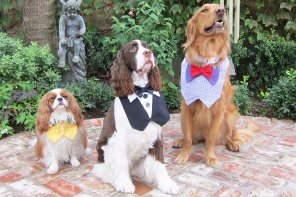 funny ways to include dogs at weddings