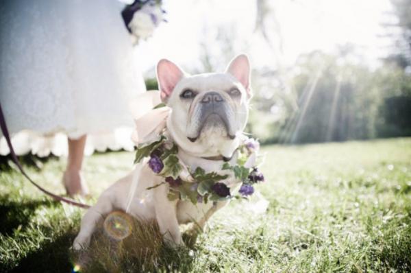 gorgeous dog photos at weddings