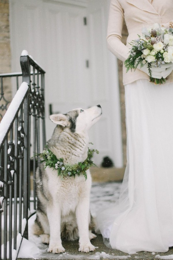 heart-melting dog photos at weddings