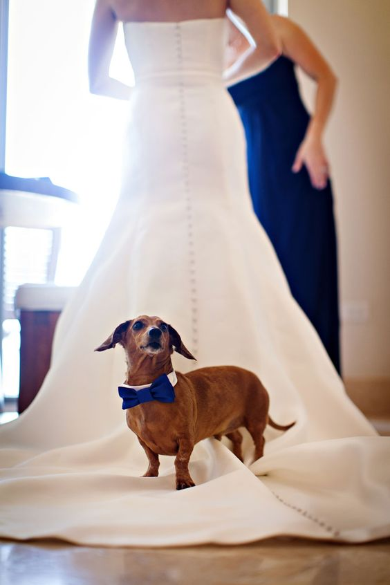 lovely dogs at owner's wedding