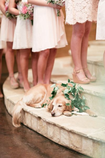 romantic dog photos at wedding