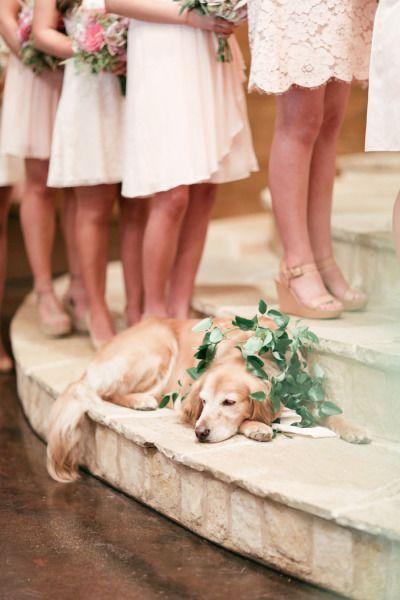 romantic dog photos at wedding