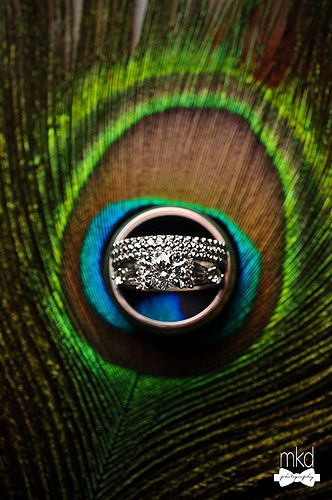 Wedding Rings On A Peacock Feather